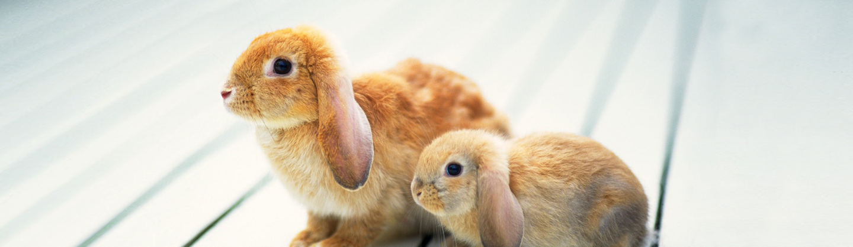 bunny, konijnen dierenarts